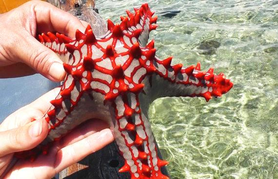 estrella-de-mar-zanzibar
