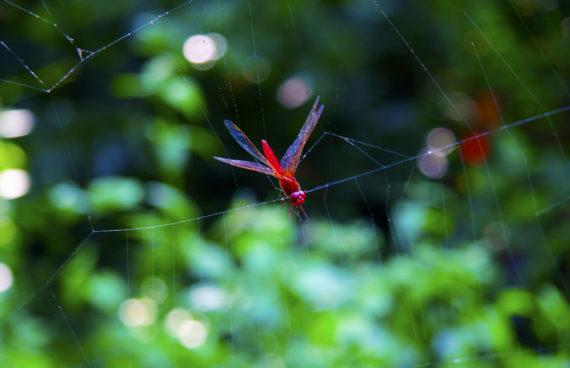 insecto-chitwan-nepal