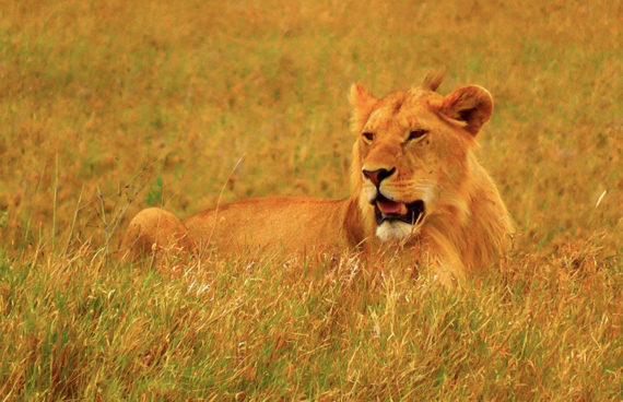 safari-a-tanzania