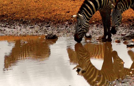 safari-bios-kenia-tanzania