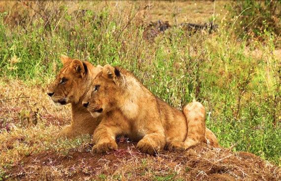 safari-karibu-tanzania