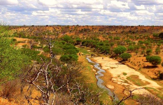 safari-livingstone-tanzania