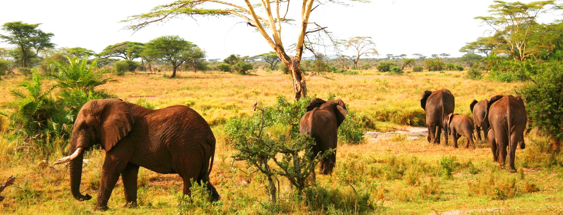 viaje-de-autor-safari